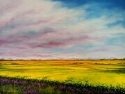 Looking West - Canola